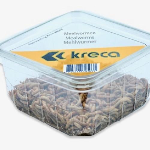 Meelwormen in bakje 100 ml.