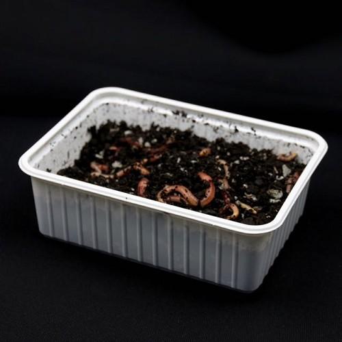 Wormen in liter bak = 200 gram wormen