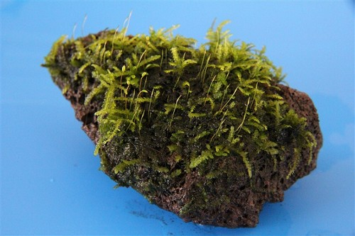 Moss on stone size S (I)