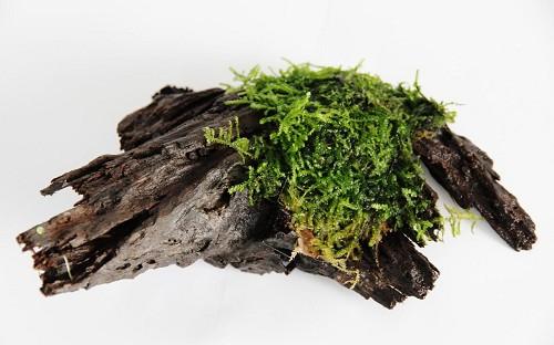 Moss Wood size S