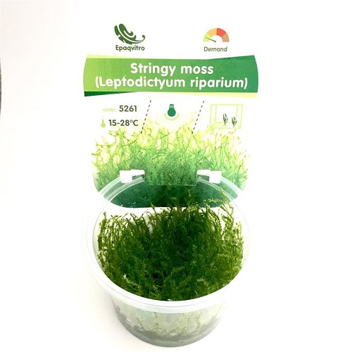 Stringy moss in cup