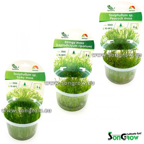 Mix mosses Epaqvitro selection 6  stuks