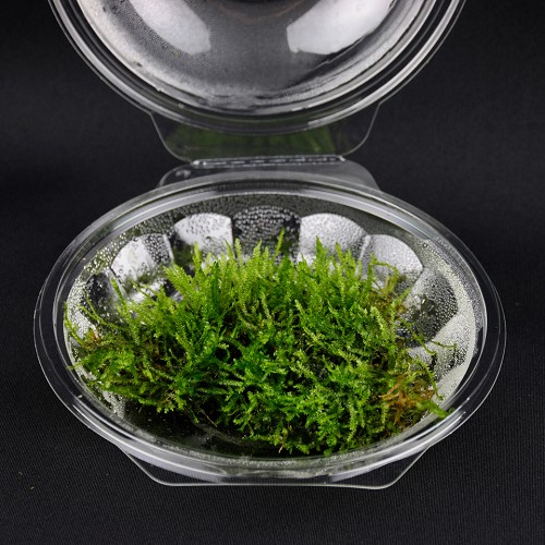Moss mix in bowl 250 ml @