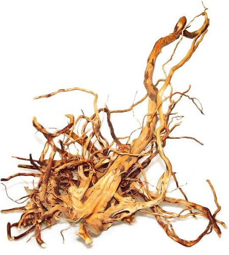 Spiderwood L (35-50 cm)