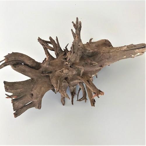 Corbo root size L > 40 cm.