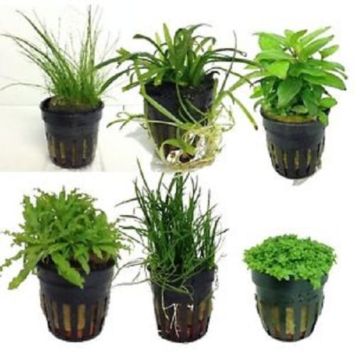 Nano plantenpakket 24 stuks